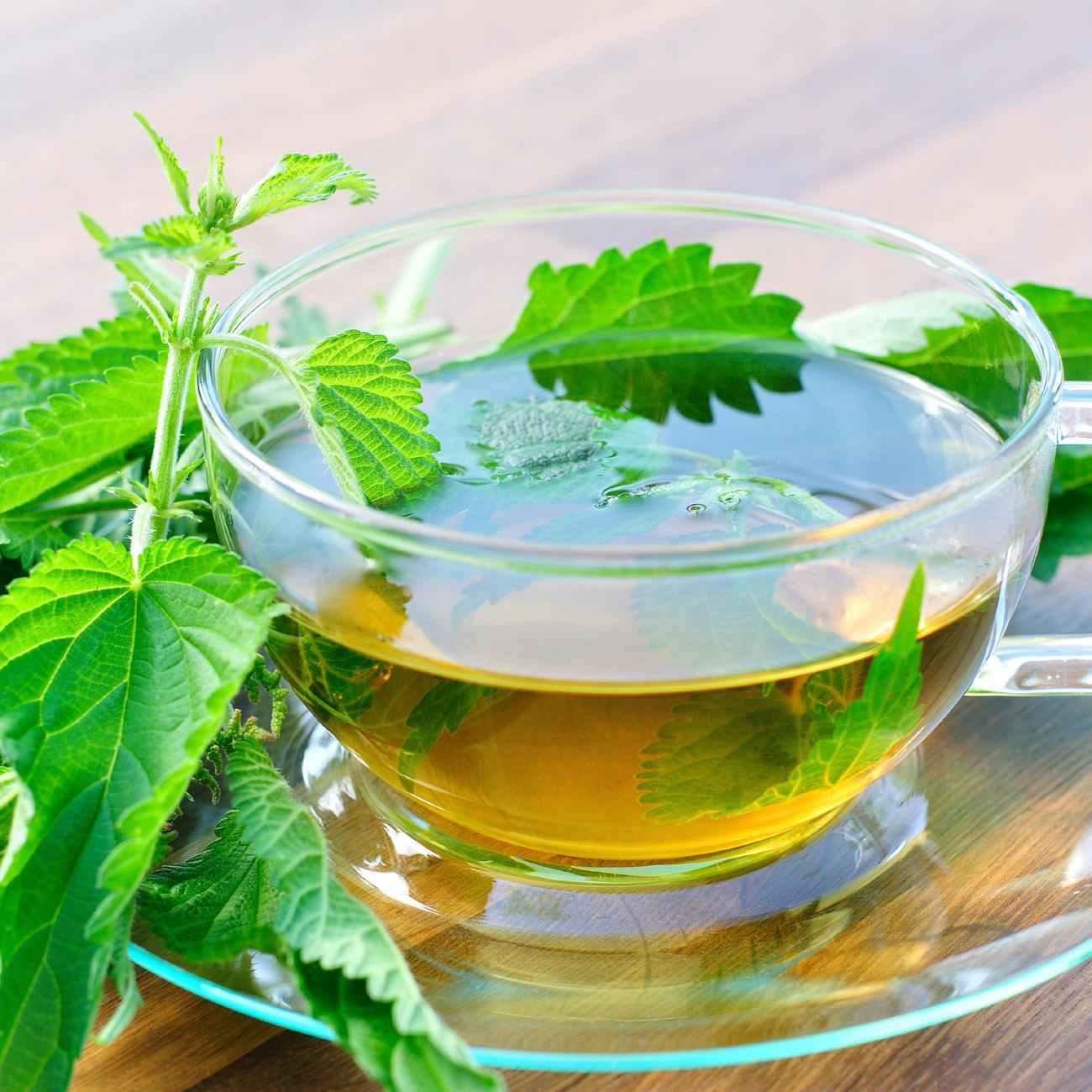 Nettle-Tea-Images