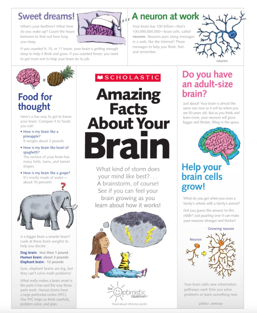 getting-to-know-your-brain-2
